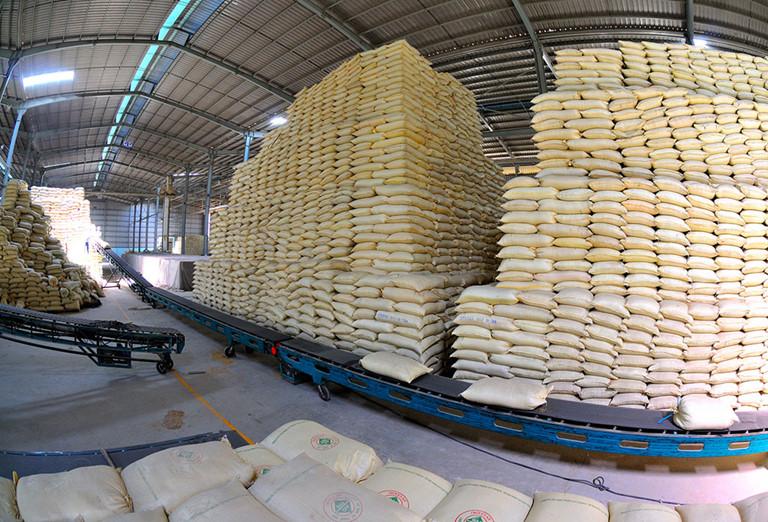 Xuất khẩu gạo trong mùa dịch Covid-19: Nên chủ động đón