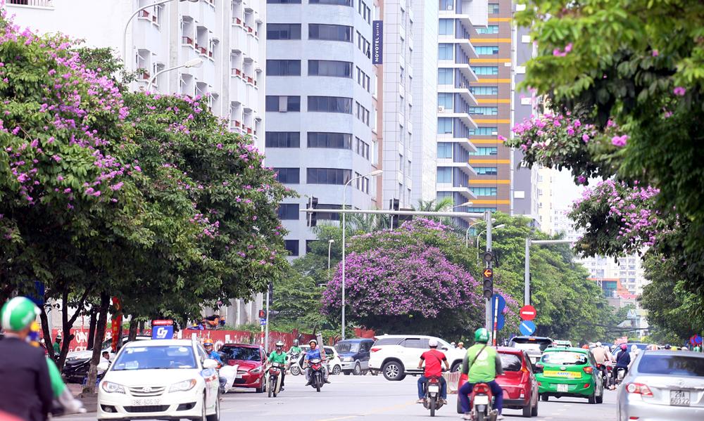 Phố phường Hà Nội ngợp sắc tím mùa bằng lăng nở hoa