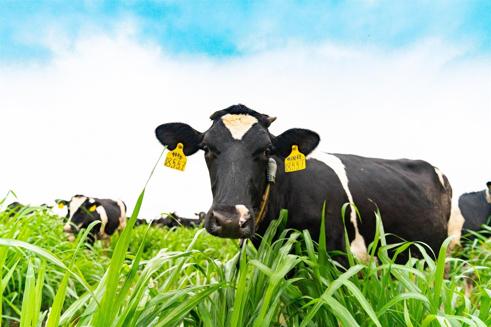 Vì sao nên chọn sữa có tỷ lệ đạm và béo cao?