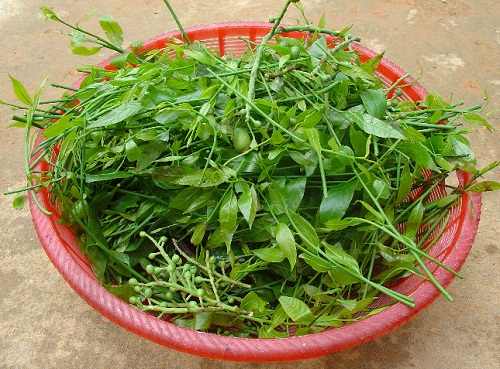 Cách chế biến rau rừng dân dã mà đưa cơm