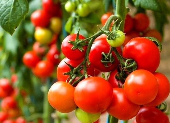 Tiêu chuẩn rau sạch của Vietgap là gì?