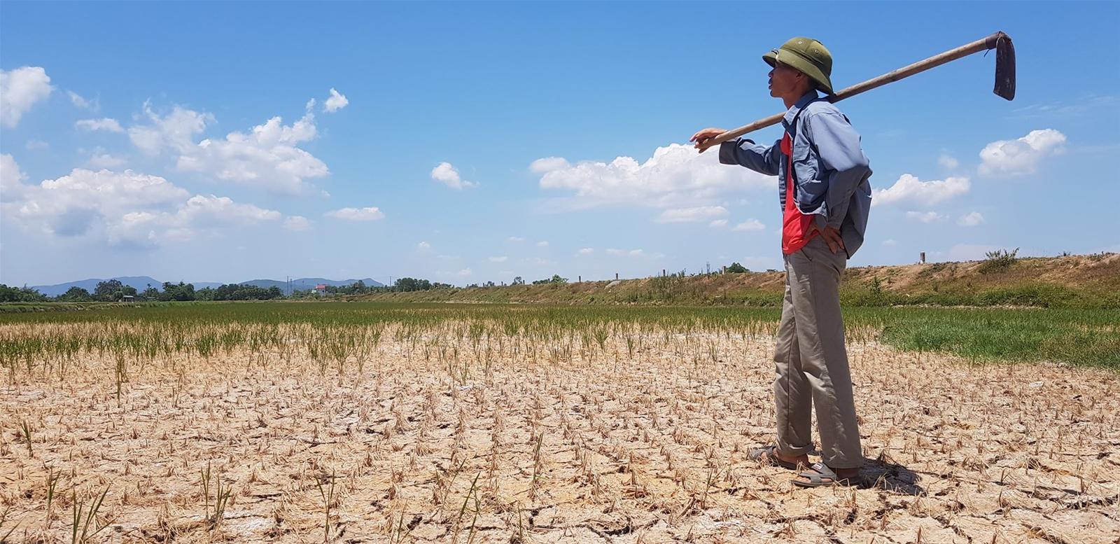 Thanh Hóa: Nguy cơ mất trắng hàng nghìn ha lúa vì nắng hạn kéo dài