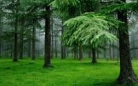 Khám phá 8 khu rừng nguyên sinh đẹp nhất Việt Nam
