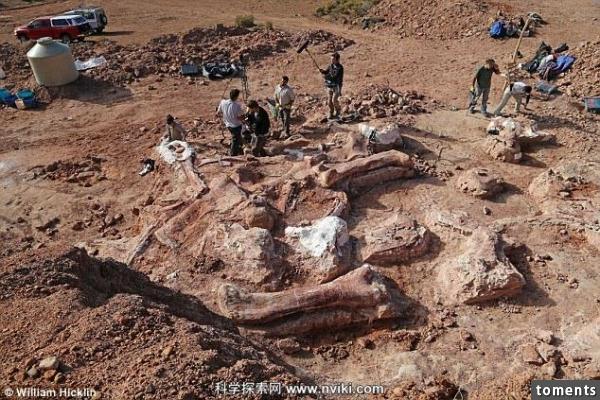 Phát hiện mới: Tìm thấy hóa thạch khủng long lớn nhất thế giới gây chấn động giới khoa học