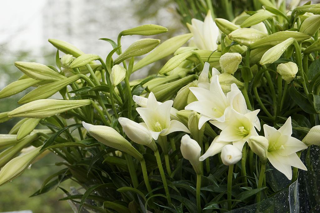 Nên và không nên chọn loại hoa nào để đi tảo mộ trong Tết Thanh Minh?