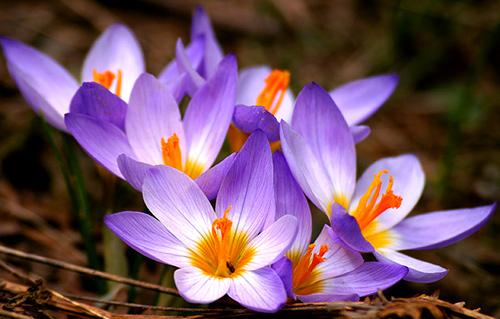 Ngất ngây với những loài hoa đắt nhất hành tinh