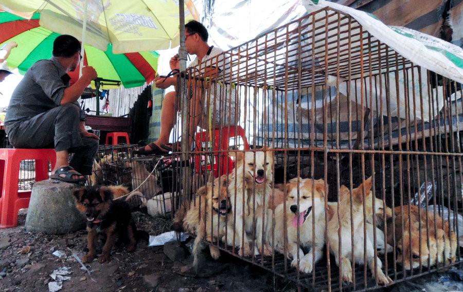 Thịt chó được coi là đặc sản ở một số quốc gia như Hàn Quốc, Trung Quốc, Việt Nam... Đặc biệt, Trung Quốc có lễ hội thịt chó ở Ngọc Lâm (Quảng Tây) đã bị người dân trên thế giới lên án và đòi hủy bỏ. Giới trẻ Hàn Quốc đã dần không còn hứng thú với món ăn truyền thống này, khiến nhiều nhà hàng phải đóng cửa. Ảnh:NPR.
