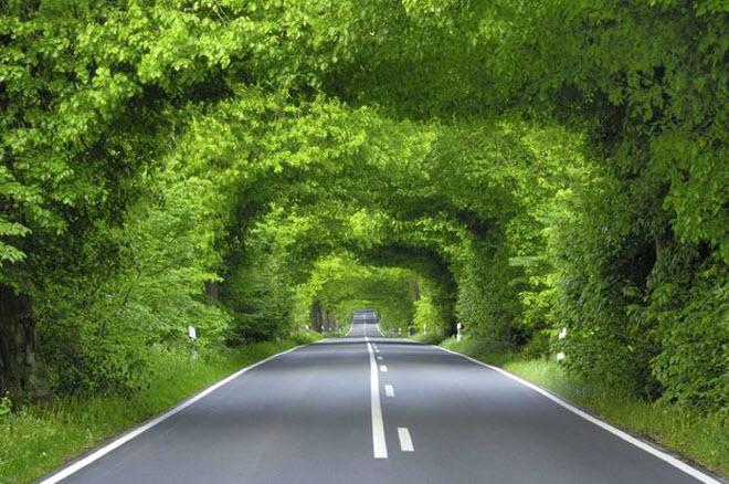 Những đường cây và hoa đẹp nhất trên thế giới
