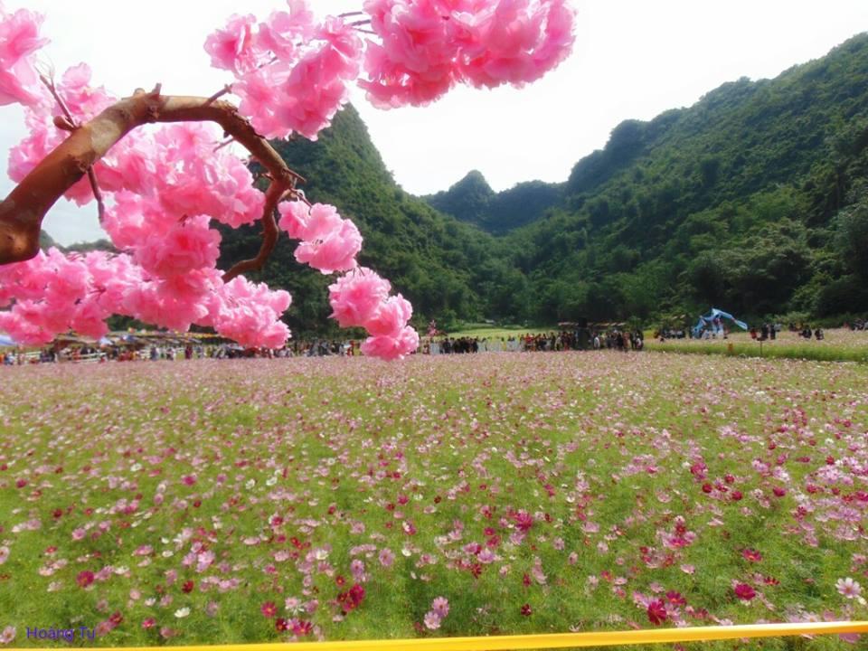 Rủ nhau đến 5 cánh đồng hoa đẹp ngất ngây nở trong tháng 10, 11