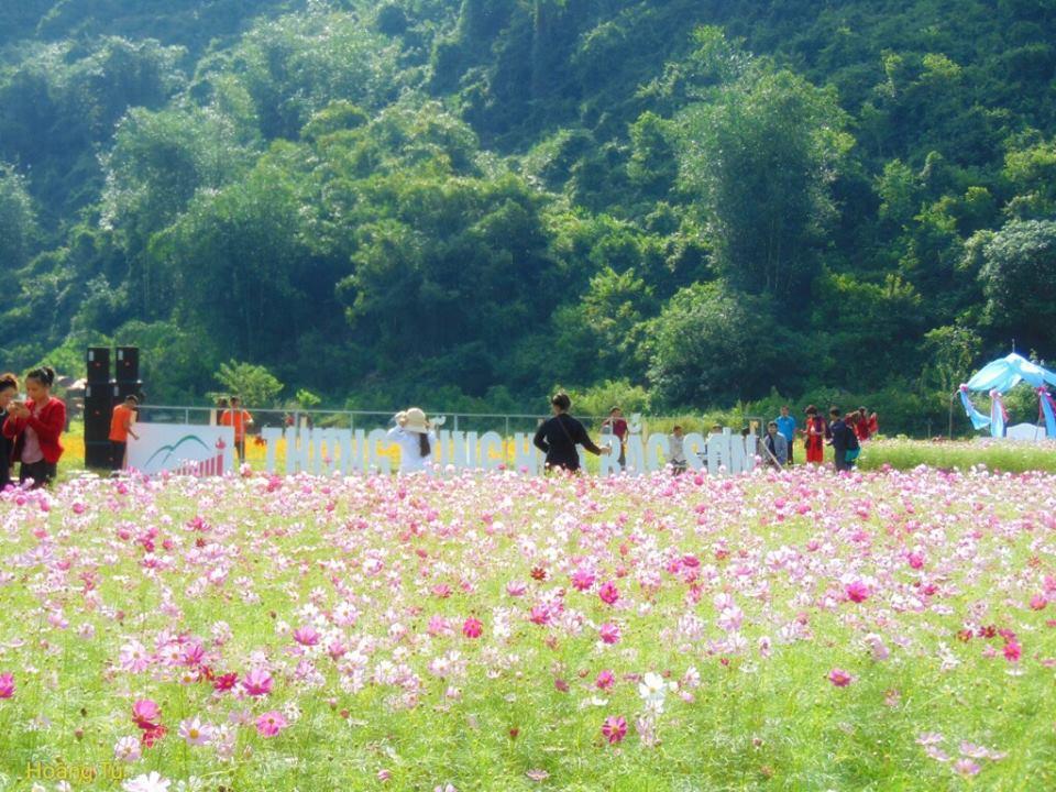 Đẹp ngất ngây thung lũng hoa Bắc Sơn nở rộ