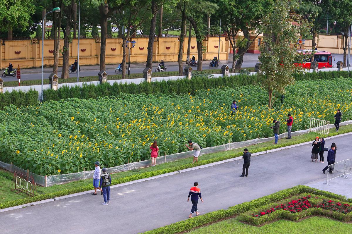 Check in cánh đồng hoa hướng dương giữa Hoàng thành Thăng Long