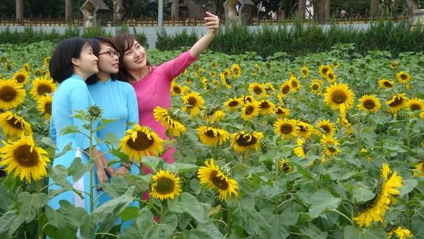 Những đóa hoa hướng dương hệt như ánh mặt trời rực rỡ