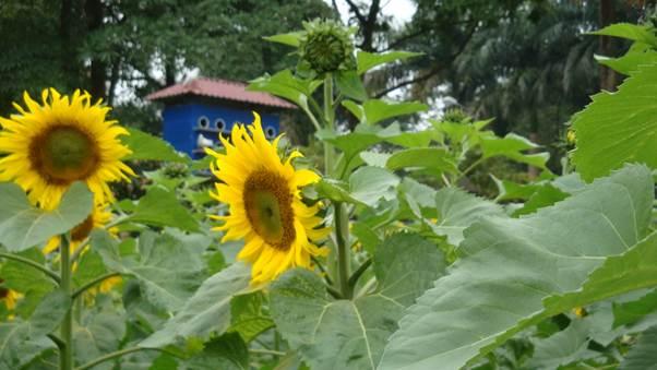 Những bông hoa tươi thắm đầy sức sống.