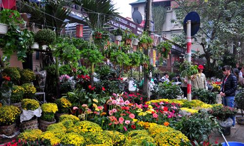 Các chợ hoa tết truyền thống nổi tiếng nhất ở Hà Nội