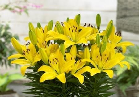 Tổng hợp các loài hoa tuyệt đối không cắm trên ban thờ ngày Tết