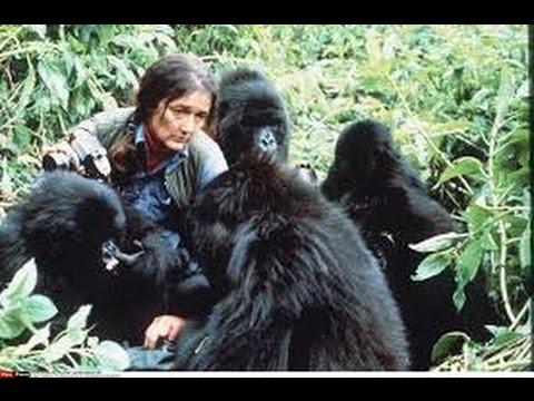 Kết quả hình ảnh cho Gorillas in the Mist