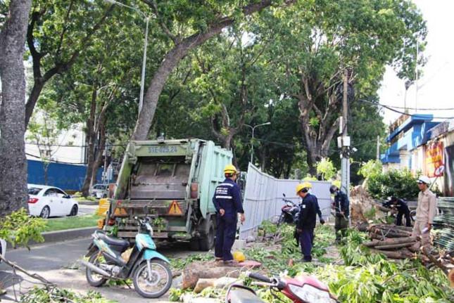 Hàng cổ thụ trên tuyến đường đẹp nhất Sài Gòn bắt đầu bị đốn hạ