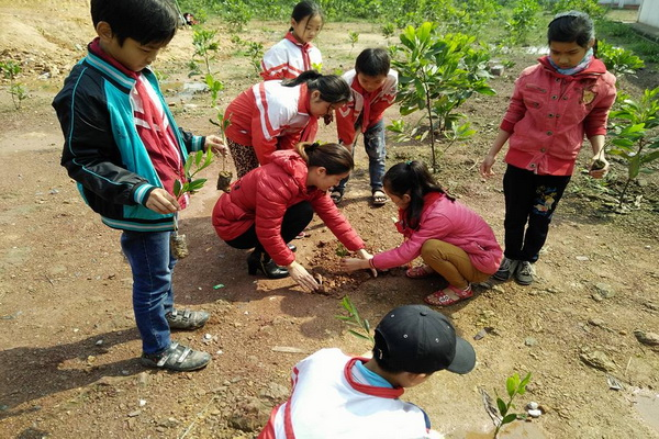 Thừa Thiên Huế: Phấn đấu tối thiểu 50% hệ thống cây xanh phủ bóng mát ở các trường học