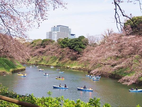 Top 3 điểm ngắm hoa anh đào đẹp mỹ mãn ở Nhật, Hàn, Đài Loan