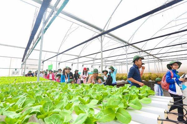 Khách hàng đến thăm quan trực tiếp các nông trường VinEco, chứng kiến tận mắt quy trình sản xuất nông sản an toàn