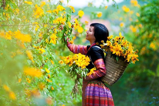 Những điểm chụp hoa dã quỳ lý tưởng nhất trong se lạnh mùa Thu