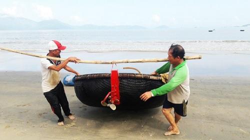 Đà Nẵng: Không còn tình trạng cá chết dạt vào bờ biển
