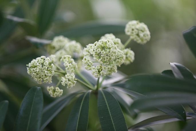 nhung tuyen duong hoa sua nang mui chuan bi duoc di chuyen