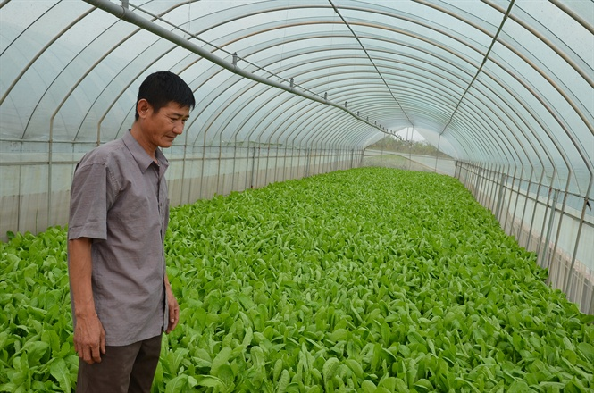Tại sao 3.534 ha rau an toàn của Hà Nội bị quá hạn giấy chứng nhận?