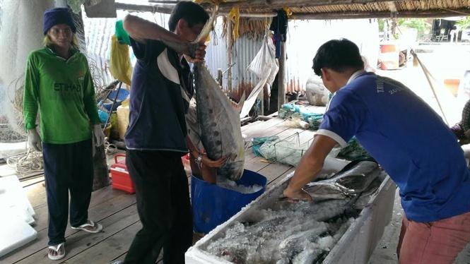 Nhộn nhịp chuyến biển cuối năm mang theo hy vọng trúng luồng tôm cá