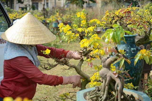 Nghề trộn phân bón cho hoa dịp Tết mang lại thu nhập khá cho người lao động. Ảnh minh họa