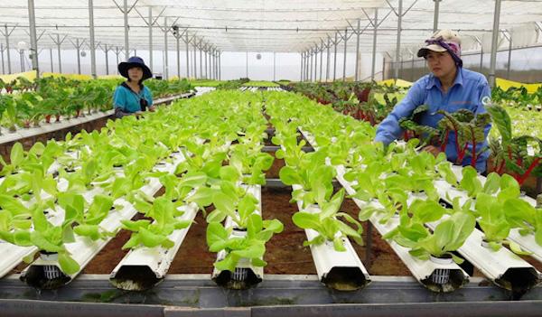 Cắt giảm thủ tục hành chính thu hút đầu tư nông nghiệp