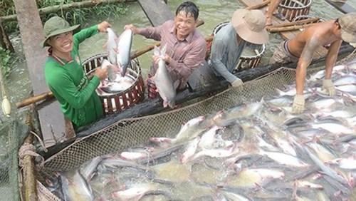 Xuất khẩu cá tra có thể vẫn giữ mức 2,2 tỷ USD trong năm 2019