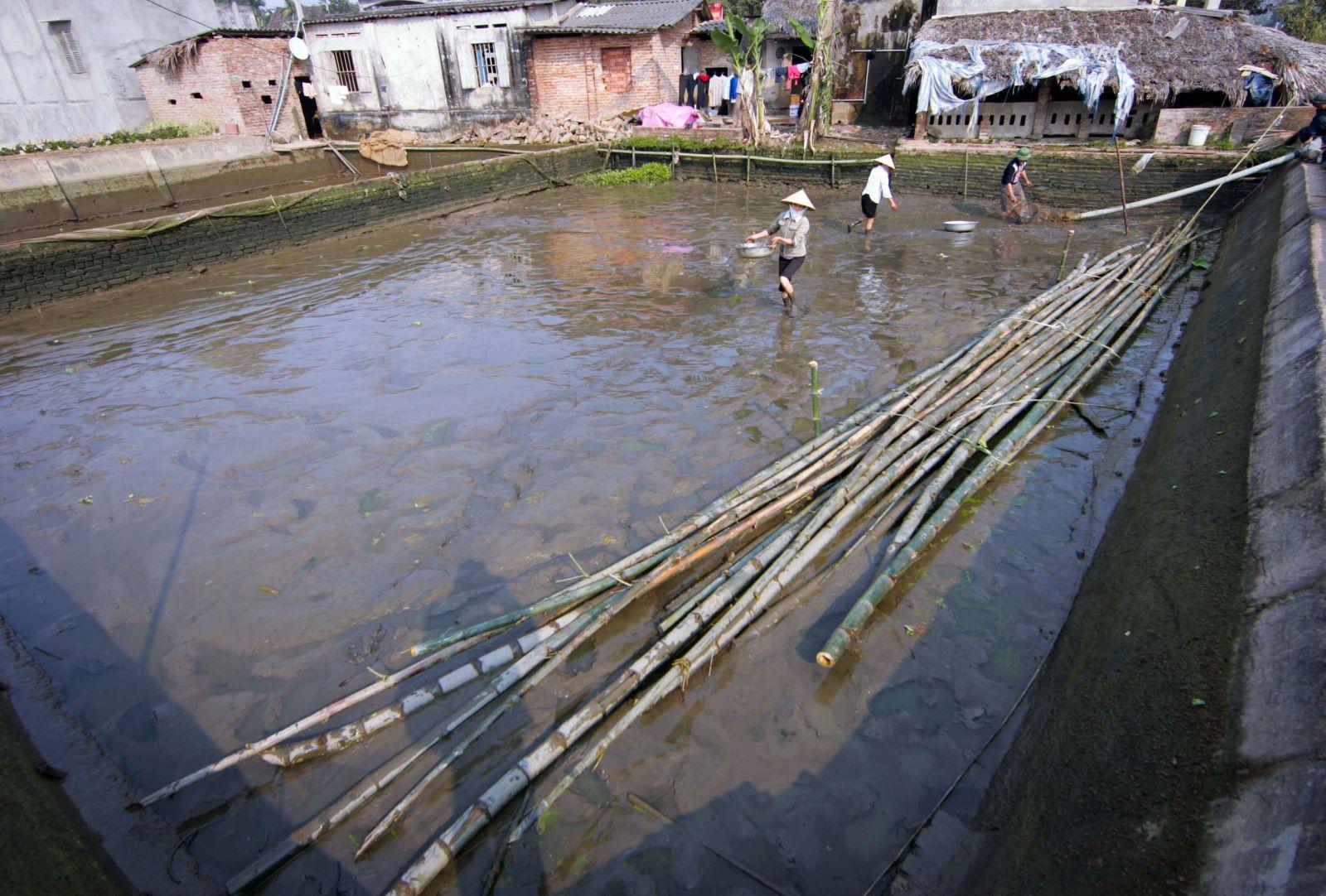 Bơm nước, tháo đầm, tát ao, bắt cá... là khoảng thời gian nhộn nhịp nhất trong năm của các gia đình ở Thủy Trầm, khi đó, cả làng biến thành một ngư trường thu nhỏ.