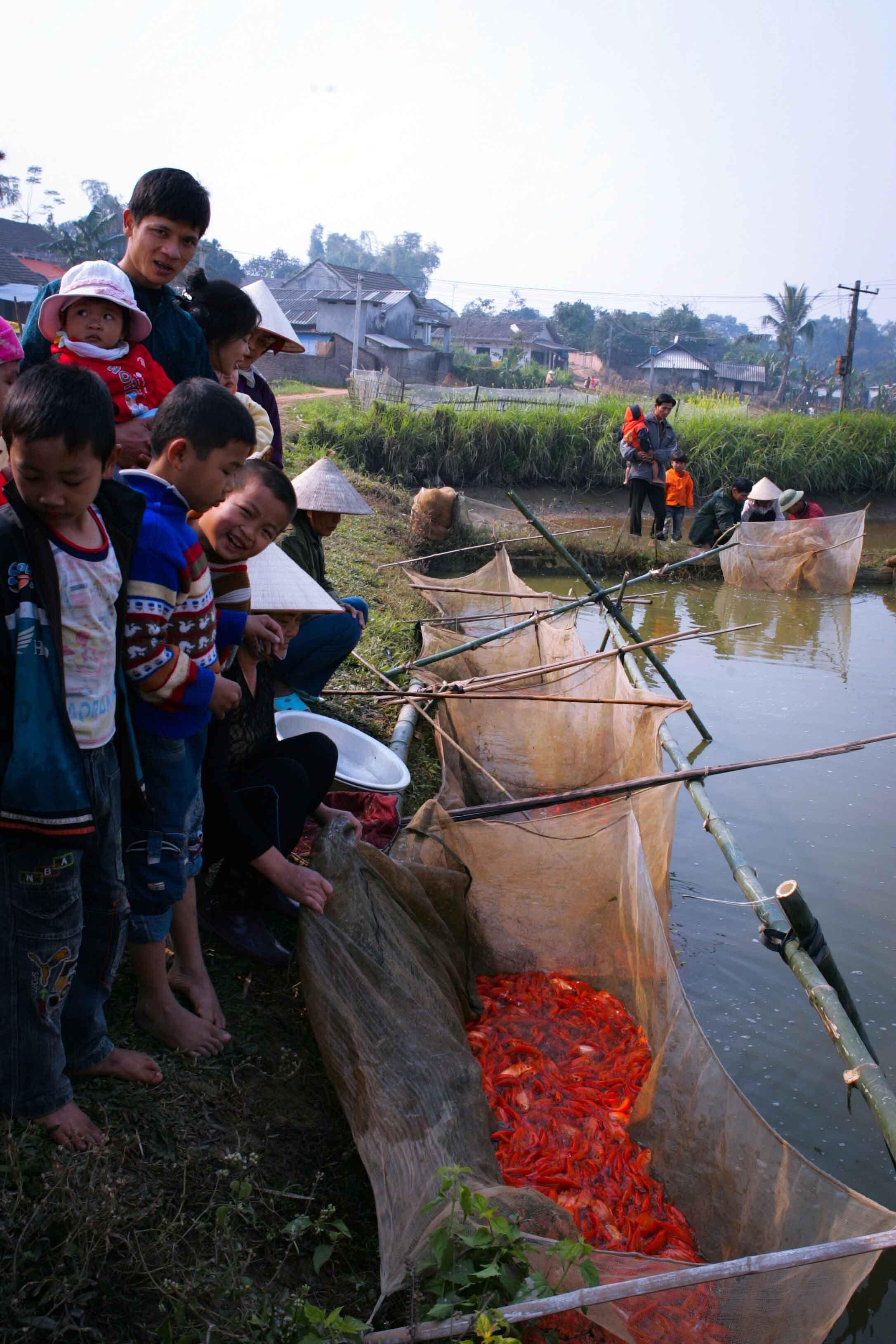 """Từ 20 đến 22 tháng chạp, trên những bờ ao nuôi cá ở Thủy Trầm là rực rỡ sắc đỏ của những """"lồ ép"""" (cách gọi lưới chứa cá của người dân địa phương)."""