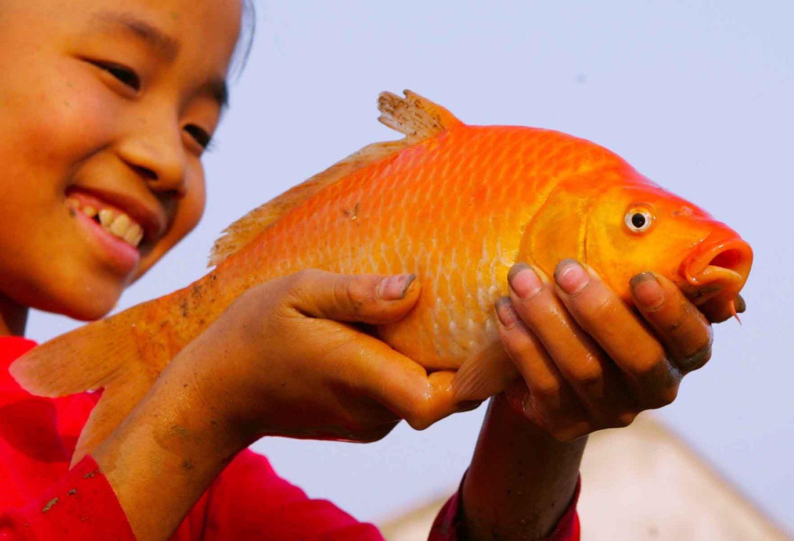 Trẻ em làng Thủy Trầm với chú chép đỏ.