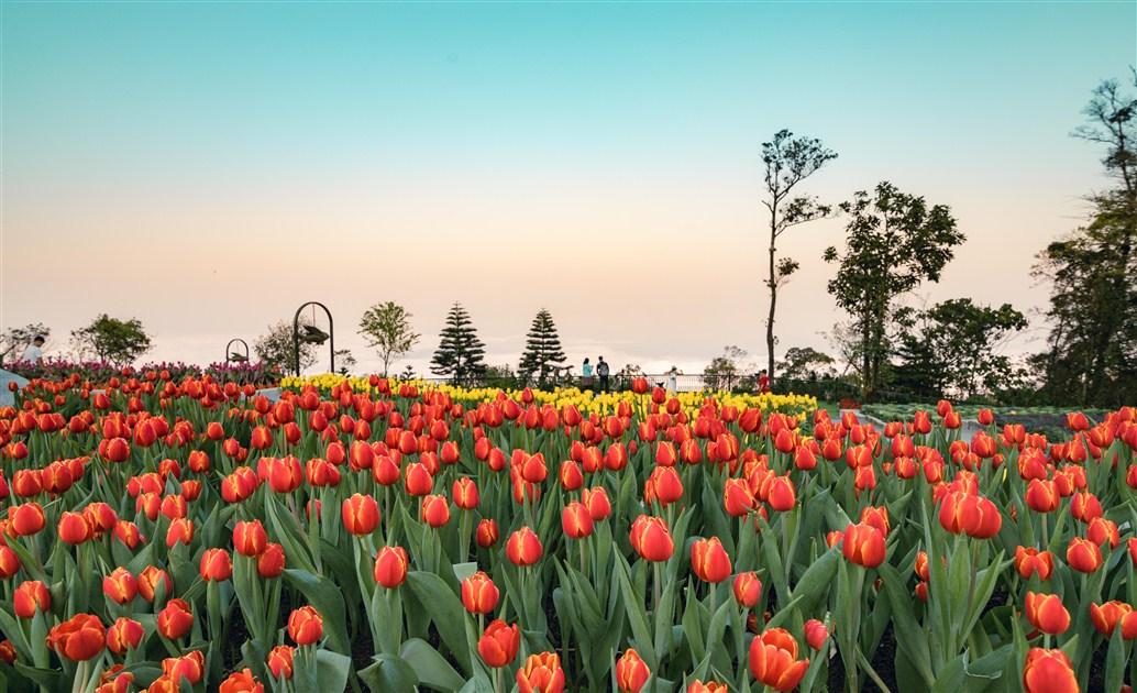 """Guinness Việt Nam trao chứng nhận """"Lễ hội hoa Tulip lớn nhất Việt Nam"""" cho Sun World Ba Na Hills"""