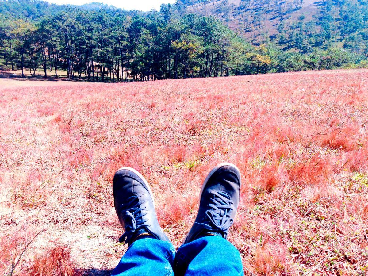 Đà Lạt lãng mạn từ những cánh đồng hoa