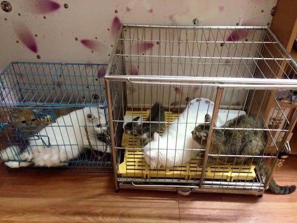 Nhiều người dân có điều kiện chăm sóc cũng đứng ra mở dịch vụ chăm sóc thú cưng dịp Tết.