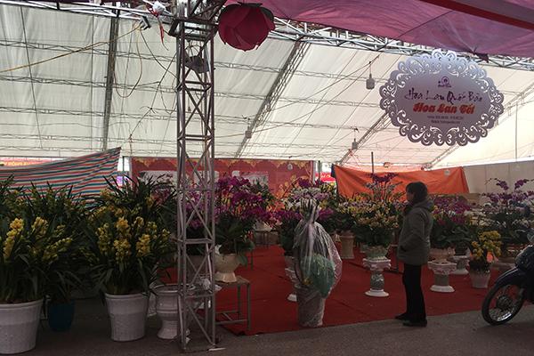 Nhiều giống lan được các nhà vườn đưa ra thị trường trong dịp tết Mậu Tuất.