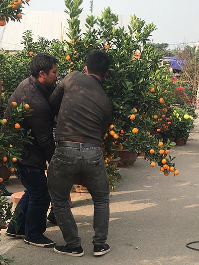 Các chủ vườn cũng bắt đầu bận rộn vận chuyển cây cảnh cho người mua.