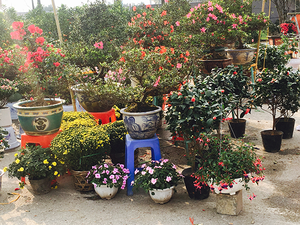 Rất nhiều các loại hoa đến từ nhiều vùng miền. Người buôn cây khắp nơi đổ về đây. Người mua cây về nhà với quan niệm mua lộc đầu năm, mang may mắn về nhà, mong muốn cho một năm mới đầy ắp tài lộc.