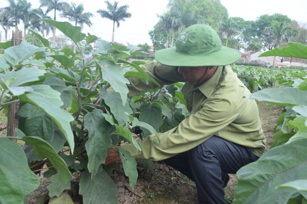 Đến vựa rau lớn nhất Hà Nội (2): Thu nhập cao từ mô hình sản xuất rau an toàn tại Văn Đức
