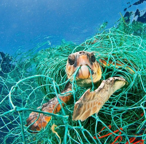 Rùa biển mắc kẹt trong lưới đánh cá