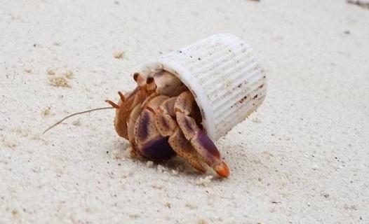 Bãi biển bị ô nhiễm đến nỗi nhựa trở thành ngôi nhà của nhiều sinh vật
