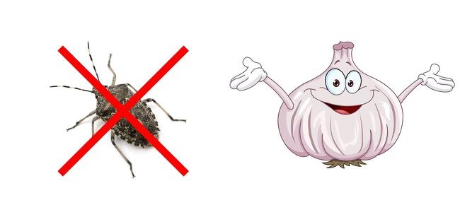 10 mẹo nhỏ đuổi sạch côn trùng ra khỏi nhà, gián biết bay cũng không thành vấn đề