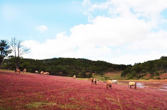 Vẻ đẹp mê đắm lòng người của đồi cỏ.