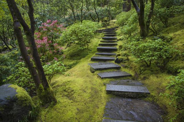 Người Nhật Bản và tình yêu vô hạn với loài rêu