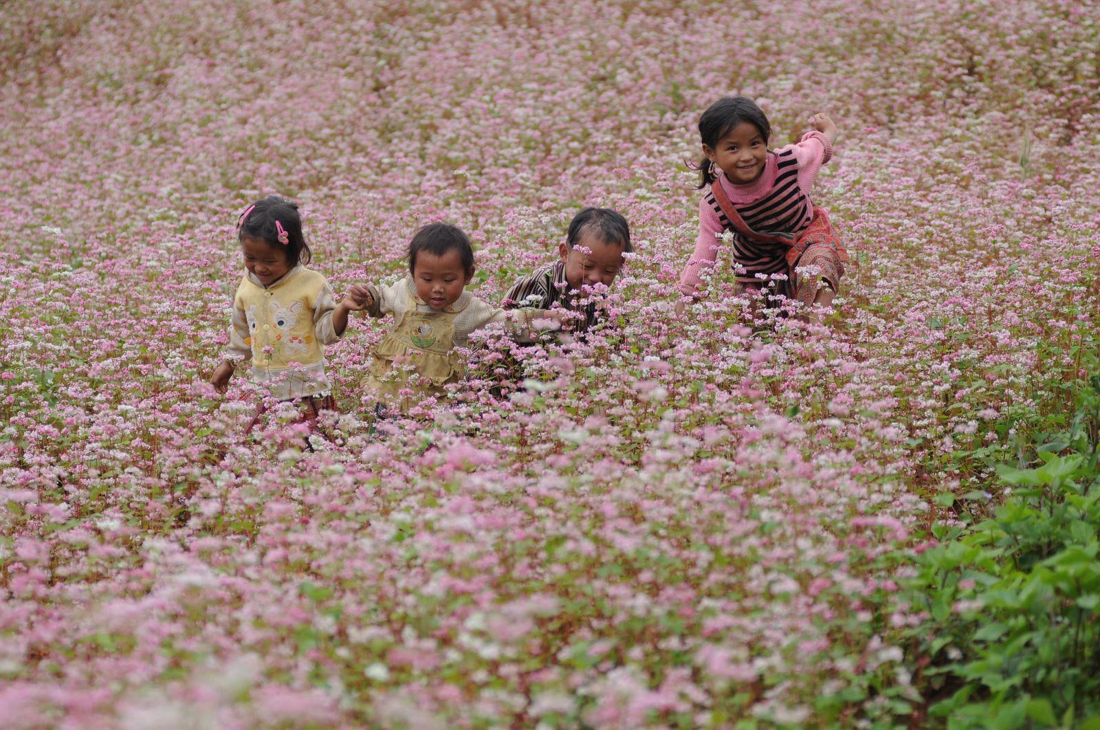 Chiêm ngưỡng những cánh đồng hoa tam giác mạch đẹp như mơ