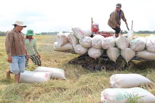"""Xuất khẩu gạo có sự """"lốt xác"""""""