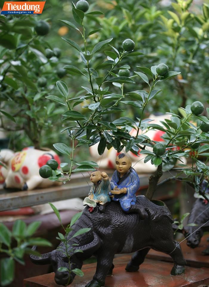 Những chậu quất bonsai này đã được khách đặt trước để chơi Tết Nguyên đán.